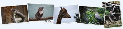 Melbourne Zoo anzeigen
